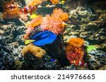 Tropical Fish   Clownfish And...