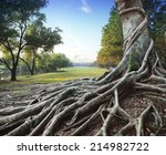 big root tree in green park | Shutterstock . vector #214982722