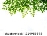 green leaf isolated on white... | Shutterstock . vector #214989598
