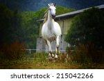 Beautiful Lipizzaner Horse...