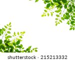 green leaf isolated on white... | Shutterstock . vector #215213332