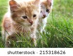 Stock photo two kitten on green grass 215318626