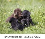 Stock photo puppies playing together 215337232