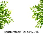 green leaf isolated on white... | Shutterstock . vector #215347846