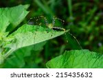 beautiful green spider on a... | Shutterstock . vector #215435632