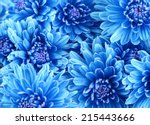 Beautiful Blue Flowers  Close Up