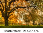 autumn scenery with trees in... | Shutterstock . vector #215614576