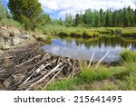 Beaver Dam On Pond