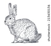 hare sketch drawing isolated on ... | Shutterstock .eps vector #215650156