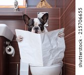 Stock photo french bulldog sitting on toilet and reading newspaper 215706655