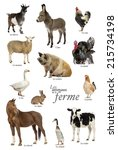 Educational Poster Farm Animal French - Fine Art prints