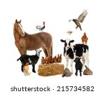 Stock photo group of farm animals 215734582