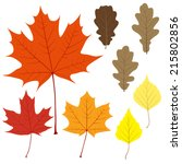 Set Of Eight Vector Leaves For...