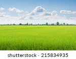 Green Field And Sky With White...