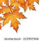 fall leaves border  with orange ... | Shutterstock . vector #215907406