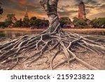 Big Root Of Banyan Tree Land...