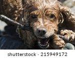 happy english cocker spaniel... | Shutterstock . vector #215949172