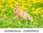 Little Rabbit Jumping On The...
