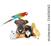 different animals  dog  cat ... | Shutterstock . vector #216036562