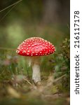 Fly Agaric Or Fly Amanita...