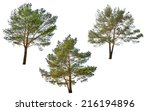 Three Pines Isolated On White...