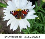 Beautiful Butterfly On White...