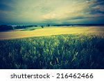 vintage photo of corn field | Shutterstock . vector #216462466
