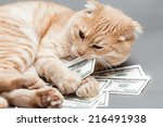 dollar and a cat | Shutterstock . vector #216491938