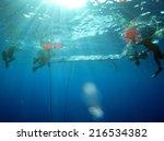 dahab  egypt  june 27  1014 ... | Shutterstock . vector #216534382