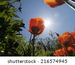 sun shining above poppies | Shutterstock . vector #216574945