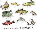 freshwater fish   Shutterstock .eps vector #216788818