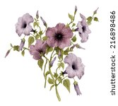 convolvulus and leaves ... | Shutterstock . vector #216898486