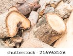 Pile Of Timber Logs In Pine...