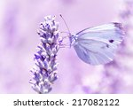 Small photo of Gentle butterfly with light purple wings sitting on lavender flower, detail of flora and fauna, amazing wild nature concept