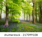 a carpet of bluebells in the... | Shutterstock . vector #217099108