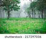 Pink Flower And Fog Green Forest