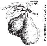 pear  vintage engraved... | Shutterstock .eps vector #217313782