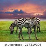 wild zebra standing in green... | Shutterstock . vector #217319305