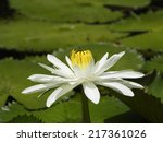 close up of water lily ... | Shutterstock . vector #217361026