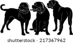 Stock vector set of silhouettes of dogs dogue de bordeaux isolated on white background 217367962