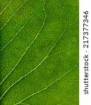 macro of green leaf   Shutterstock . vector #217377346