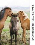 three beautiful wild horses in... | Shutterstock . vector #217637956