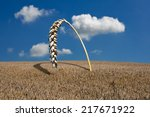 Cornfield With Extra Large Wheat