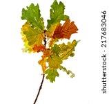 colored autumn oak branch...   Shutterstock . vector #217683046