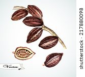 vector watercolor cocoa beans... | Shutterstock .eps vector #217880098