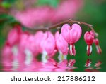 Dicentra  Bleeding Heart Flowe...