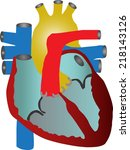 human heart . vector... | Shutterstock .eps vector #218143126