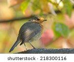 european robin on autumn branch    Shutterstock . vector #218300116