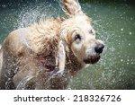 Shaking Dog. Beautiful Golden...