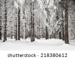 Winter Forest With Trees...